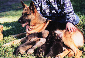 KUIRAU TEQUILA SUNRISE and her beautiful litter